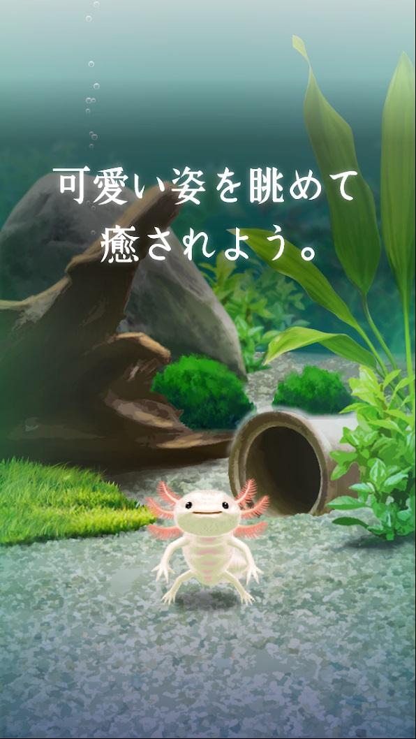 癒しのウーパールーパー育成ゲーム